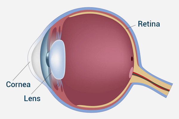 eye anatomy cornea lens and retina